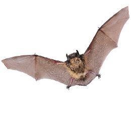 Postzegels      van het thema Vleermuizen  '