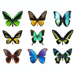 Postzegels      van het thema Vlinders  '