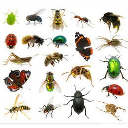 Image result for insecten