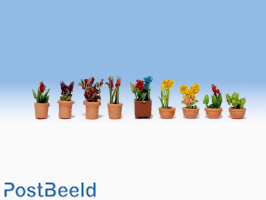 9 ornamental plants in Pot