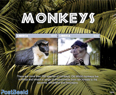 Monkeys 2v m/s