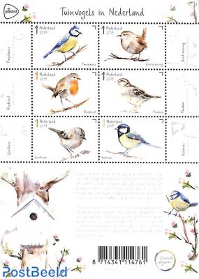 Birds 6v m/s