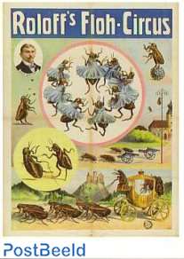 Circus, Roloffs Floh-Circus