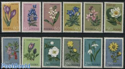 Flowers 12v