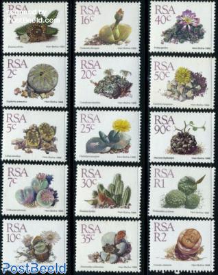Succulentes 15v